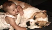 Child_Mauls_Pit_Bull_by_SkyeStaff