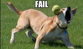 EPIC_FAIL_DOG_by_cobalt900
