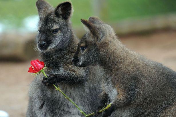 PM2743357@ANIMALS+Valentine