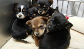 Si tu vrei sa se interzica vanzarea de animale in pet shop-uri?