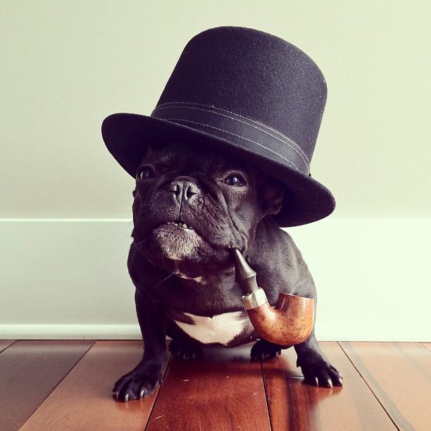 Faceţi cunoştinţă cu Trotter, bulldogul care are 30.000 de prieteni pe Instagram! FOTOGRAFII SENZAŢIONALE