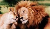 animal-love-photos-02