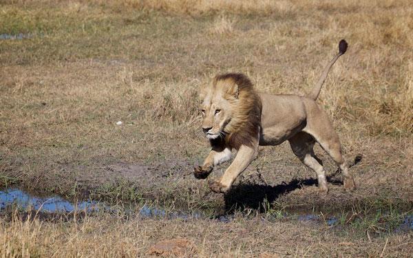 Crezi ca in aceasta imagine se afla un leu? Mai gandeste-te!