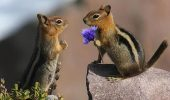 beauty-the-beasts-15-animals-who-love-flowers-L-W8RrIj