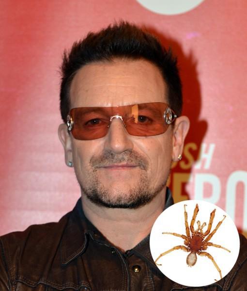 Bono de la U2 este un… păianjen