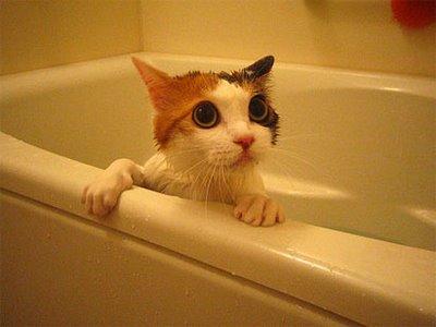 cat bath3
