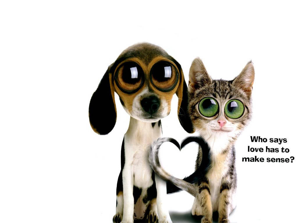 cat-dog-love