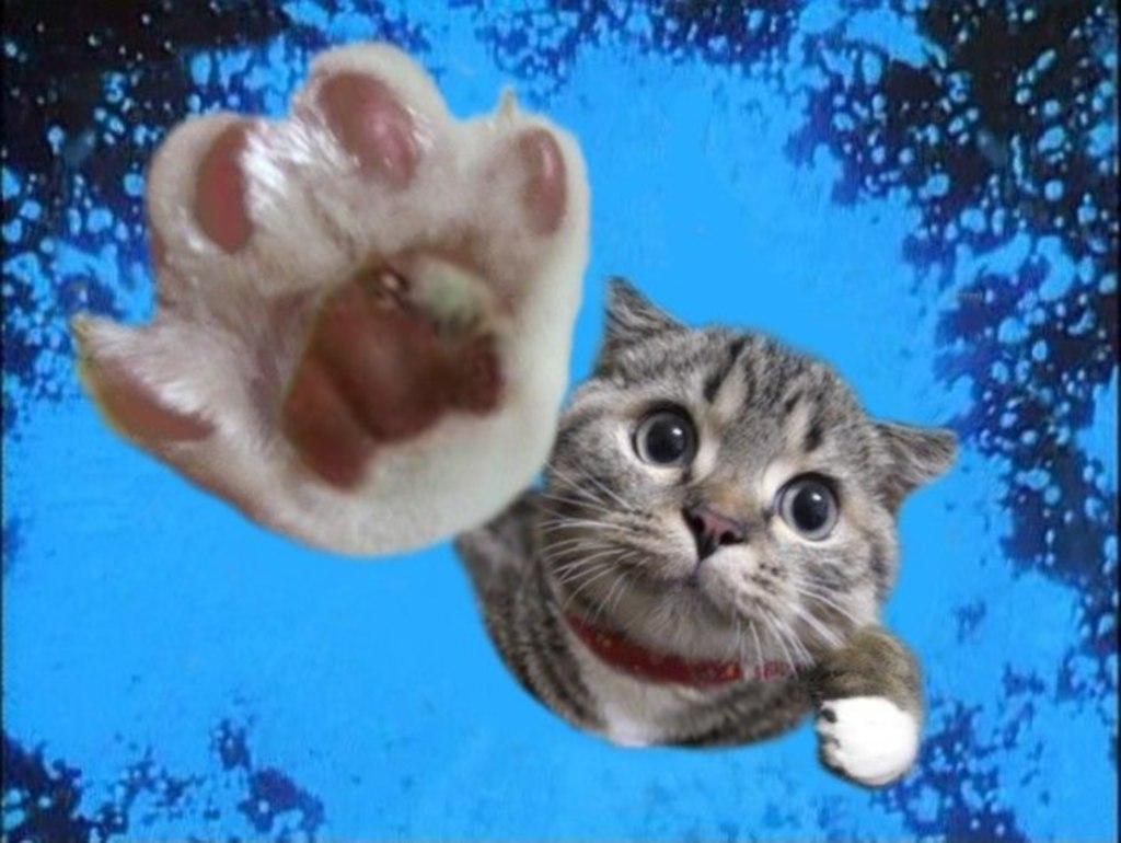 Pisica mea isi roade unghiile! Ce e de facut?