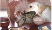 Pisicile ar da orice sa dispara pozele astea de pe internet!
