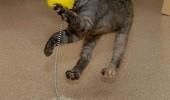 cat_fail_10