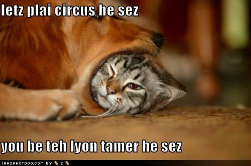cat_fail_2
