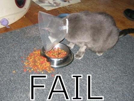 cat_fail_3