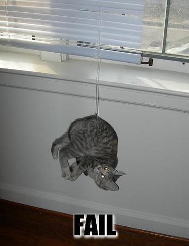 cat_fail_4