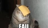 cat_fail_5