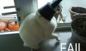 cat_fail_9