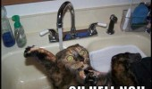 cat_in_sink.jpg-500x400
