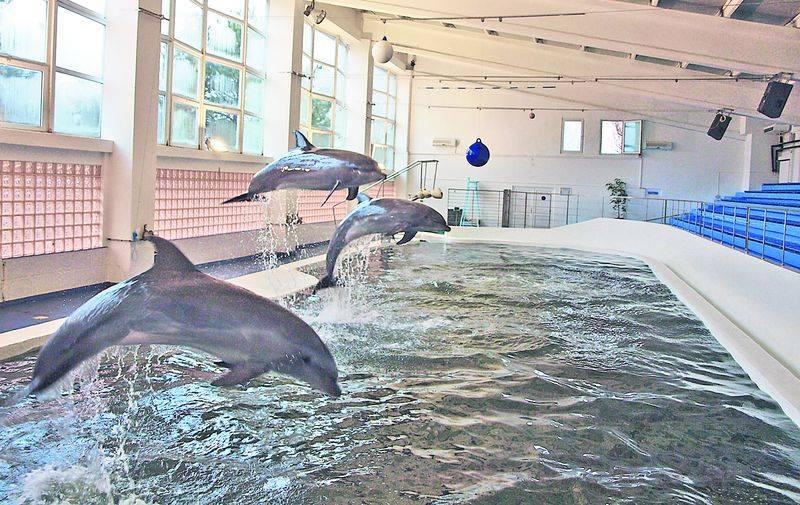 Delfinii de la Constanța vor ajuta copiii cu tulburări neuropsihice