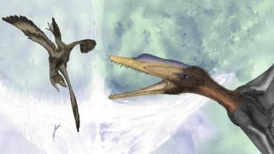 Oamenii de ştiinţă au descoperit în România fosilele unui nou tip de reptilă zburătoare