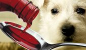 dog_medicine