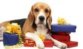 dog_w_gifts