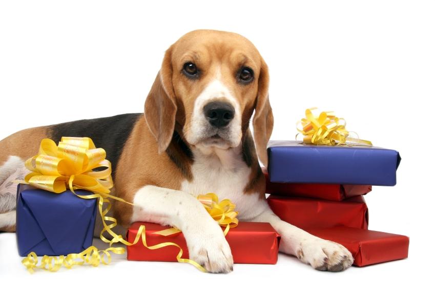 De Valentine's Day, animalele au primit cadouri în valoare de 46 milioane de dolari!