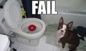 fail-dog