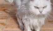 fluffy20cat23