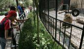 Grădinile zoologice din Sibiu şi Braşov în ample procese de modernizare, cea din Turda va fi redeschisă în primăvară