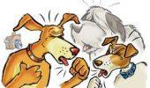Ce este tusea canina? Cat de grava poate fi? Cum se poate evita?