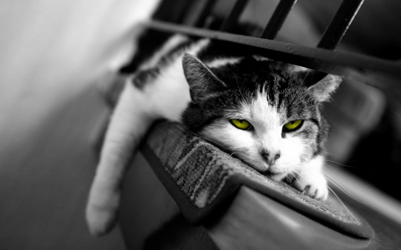 Обои Домашний кот на отдыхе фото.