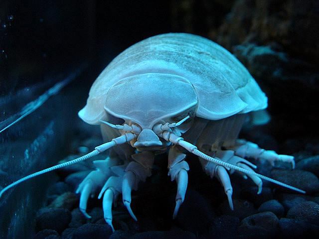 O creatură marină de la un acvariu din Japonia nu a mai mâncat de patru ani | VIDEO
