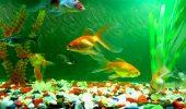 main aquarium