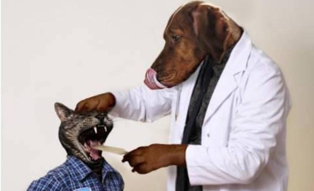 Ai nevoie de sfatul unui veterinar? Scrie-ne!