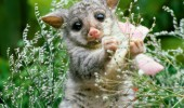 opossum_grass_flowers_animal_66655_1920x1440