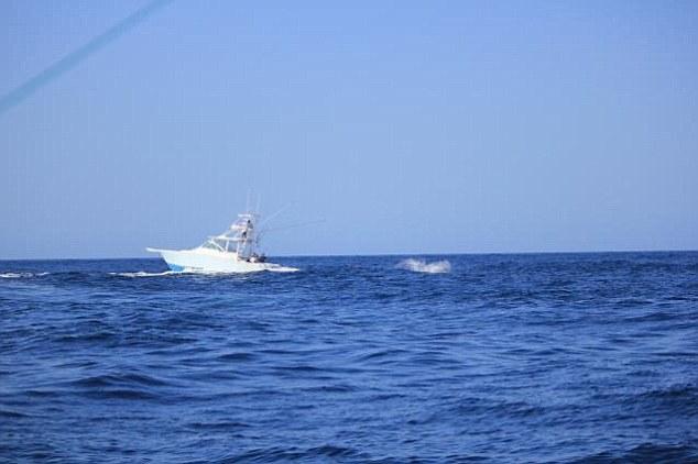 Victorie pentru un peşte-sabie. A răsturnat barca pescarilor