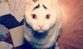 Cea mai mirată pisică din lume pare desprinsă din desene animate