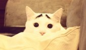 pisica 3