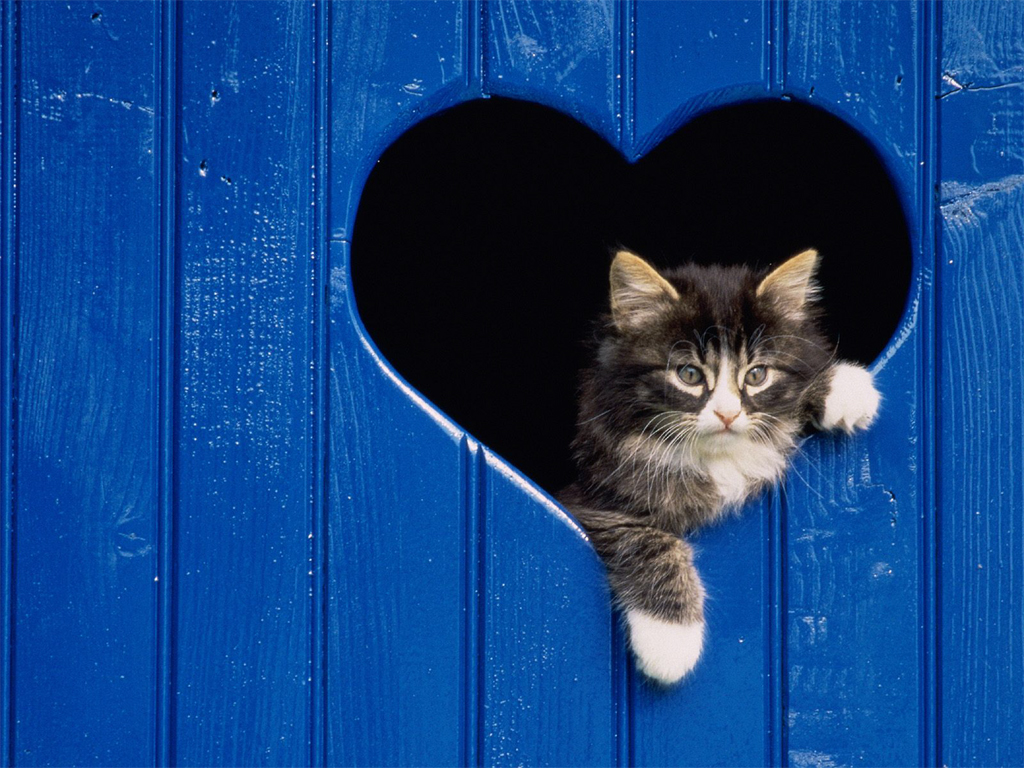 Frumoasele pisici si legendele lor