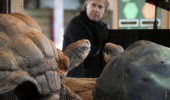 richard-clayderman-at-london-zoo-4-1360255655-view-0