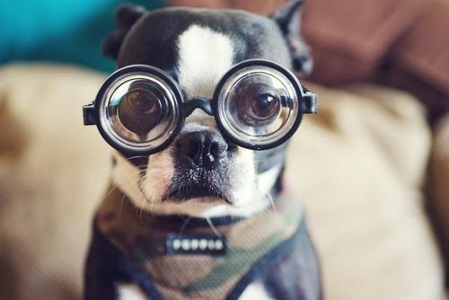 Top 10 a celor mai deștepte rase de câini!
