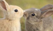 valentine-animals-5