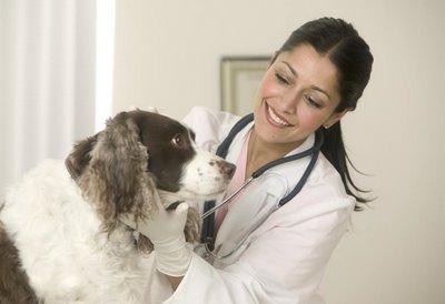 Câți bani trebuie să ai la tine când mergi la veterinar