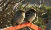 Păsările îşi aleg partenerii în funcţie de mărimea ciocului