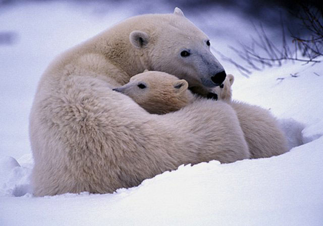 969812_animal_mother_baby_19_jpg59daeba9f90c945c88dfe216f726455d