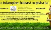 Concurs_Pisici
