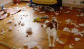 Limbajul SOS al cainilor! Explicatia comportamentului distructiv