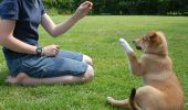 Dog-Training-How-to-Train-Your-Dog-to-Sit1440856