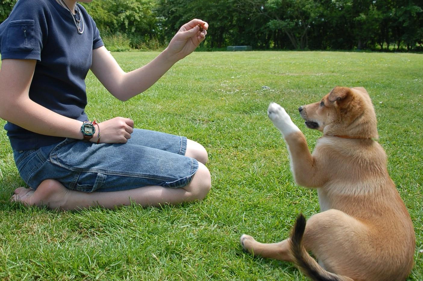 Bazele dresajului canin