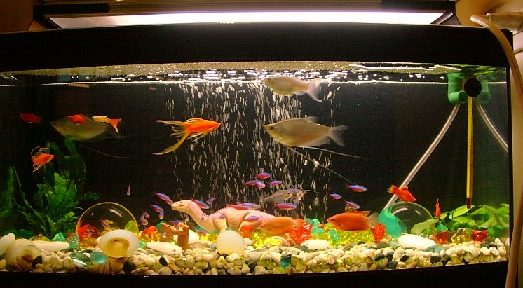 Bacteriile din filtre, soldaţii acvariului