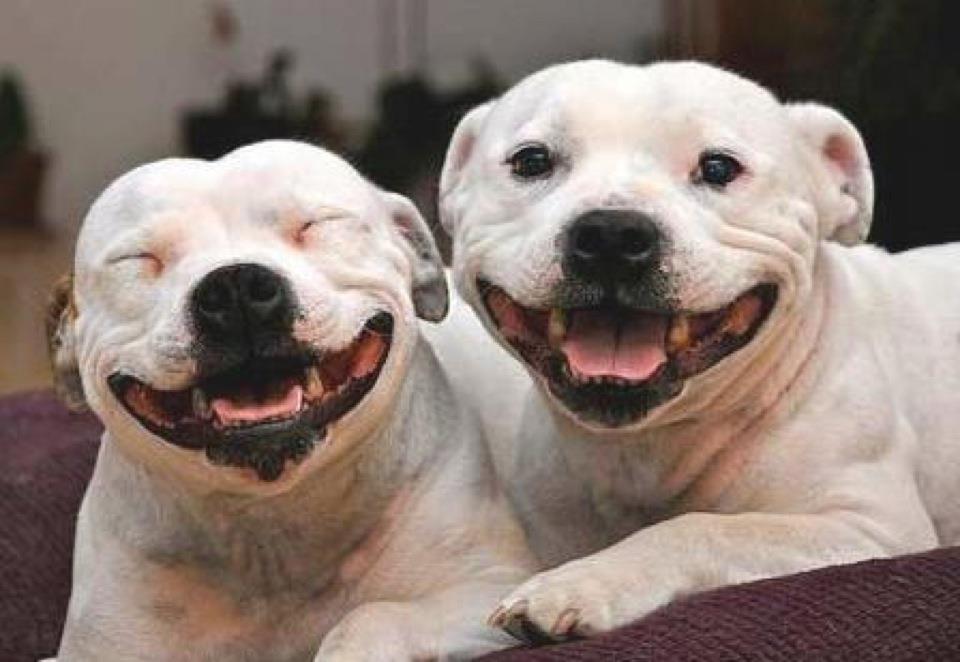 Afla de ce sunt asa fericiti!